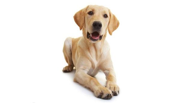 Aufgabe von Kollagen in den Gelenken eines Hundes?