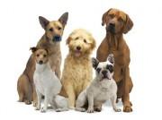 Hunde und Katzen Nerven stärken