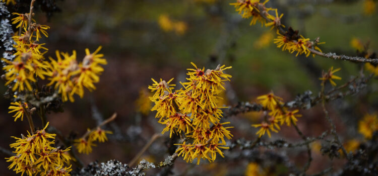 Pflanzenmedizin – Arneimittel aus der Natur