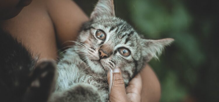 Katzen – schon lange unsere Begleiter