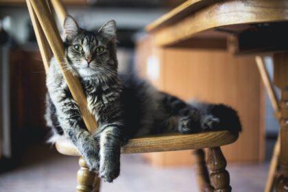 katze-liegt-im-stuhl