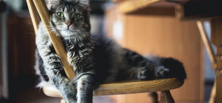 Katzen – was sie brauchen & wenn sie krank sind