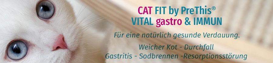 Katze Verdauung und Magen Darm
