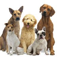 Gesunde Hundegelenke