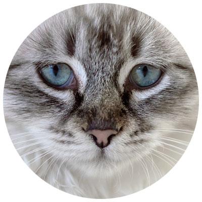 Katze Gelenke