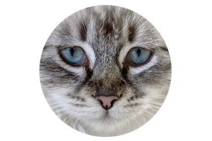 Katze Inkontinent