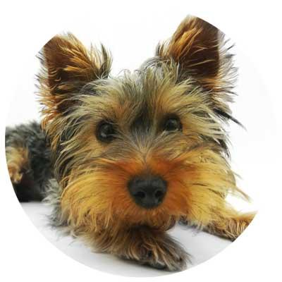 Hund Verdauung und Magen Darm Trakt
