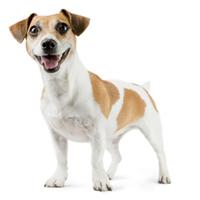 Hund mit starkem Gebiss und frischem Atem