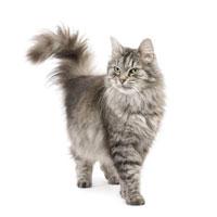 Stärken Sie das Immunsystem Ihrer Katze