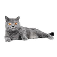 Gesunde Zusatznahrung für Katzengelenke