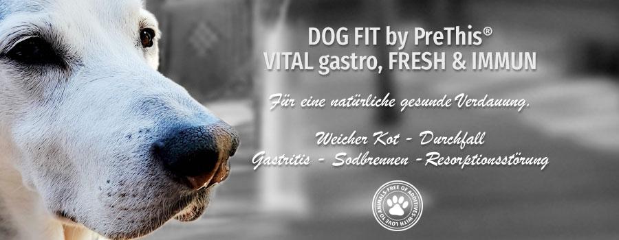 Gesunde Verdauung für Hunde