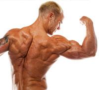 Starke Muskeln und effektiver Muskelaufbau