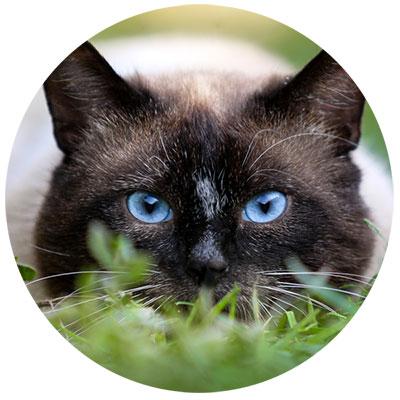 Katze Omega 3