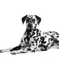 Die Abwehrkräfte & das Immunsystem Ihres Hundes stärken