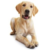 Hund mit gesundem Fell und Haut